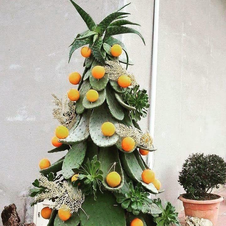 Cactus as a Christmas tree. Pic by orenishiiste