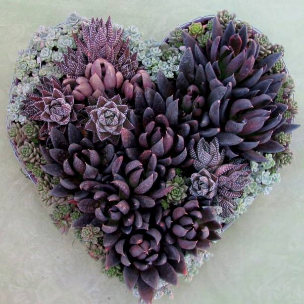 Succulent In Shape Of Heart For Nature Lover