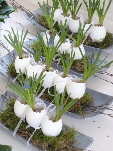 Smart Way To Use Egg Shell For Growing Plants