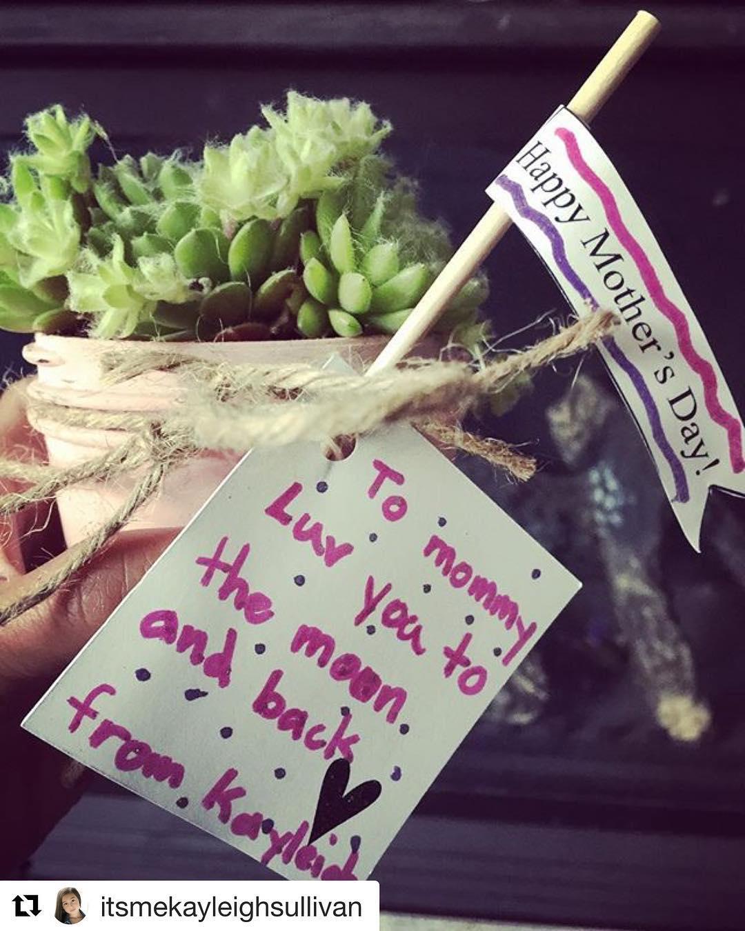 Succulent For Your Mom
