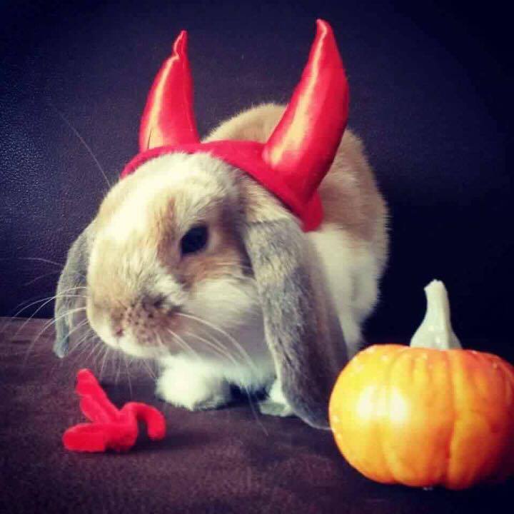 Gorgeous rabbit dress up for Halloween party.