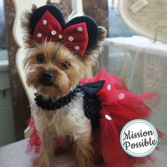 Minnie mouse dog costume for Halloween.