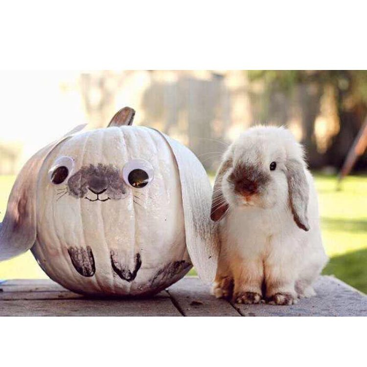 Pumpkin bunny is looking cute. Pic by ourlovingcritters
