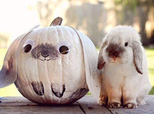 Real bunny with pumpkin bunny.