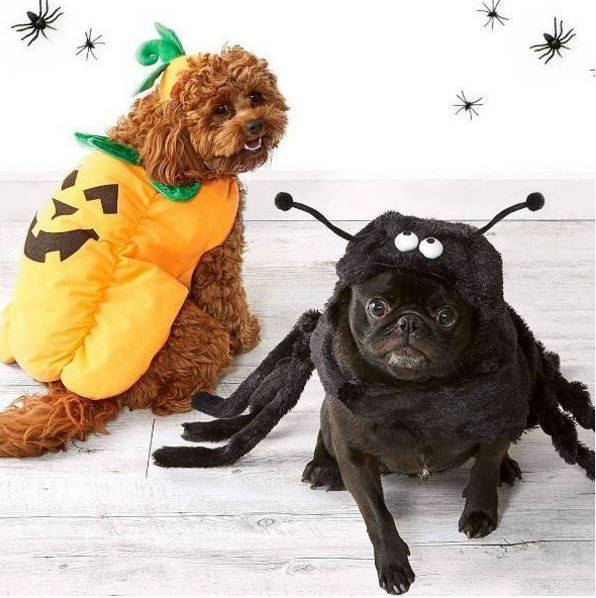 Spider and trick or treat pet costume.