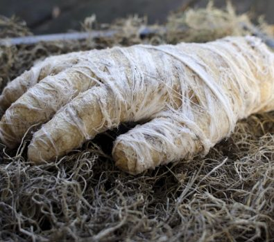 Creepy mummy hand for decor.
