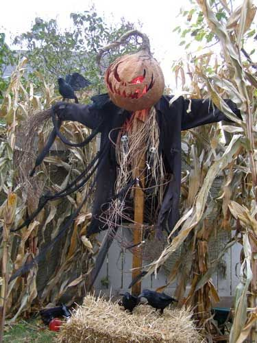 Haunted scarecrow for outdoor decor.