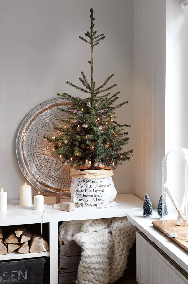 Small rustic potted Christmas tree.