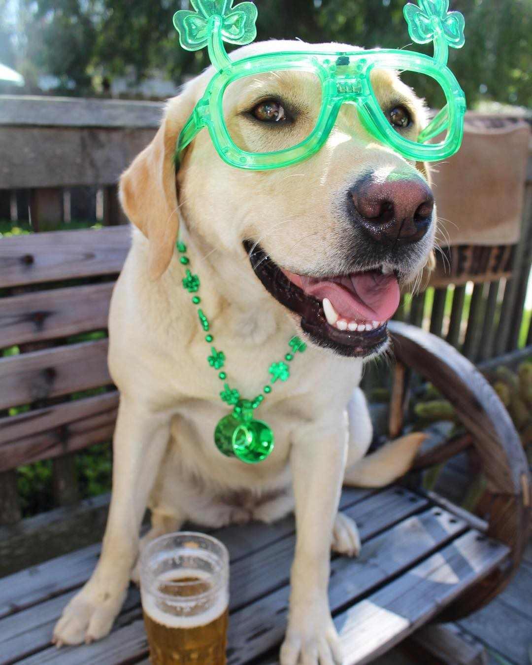 Nice idea for dog at St. Pattys day.