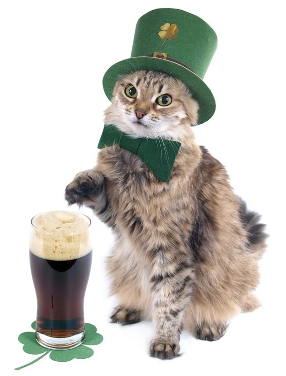Your cat is ready for St. Pattys day.
